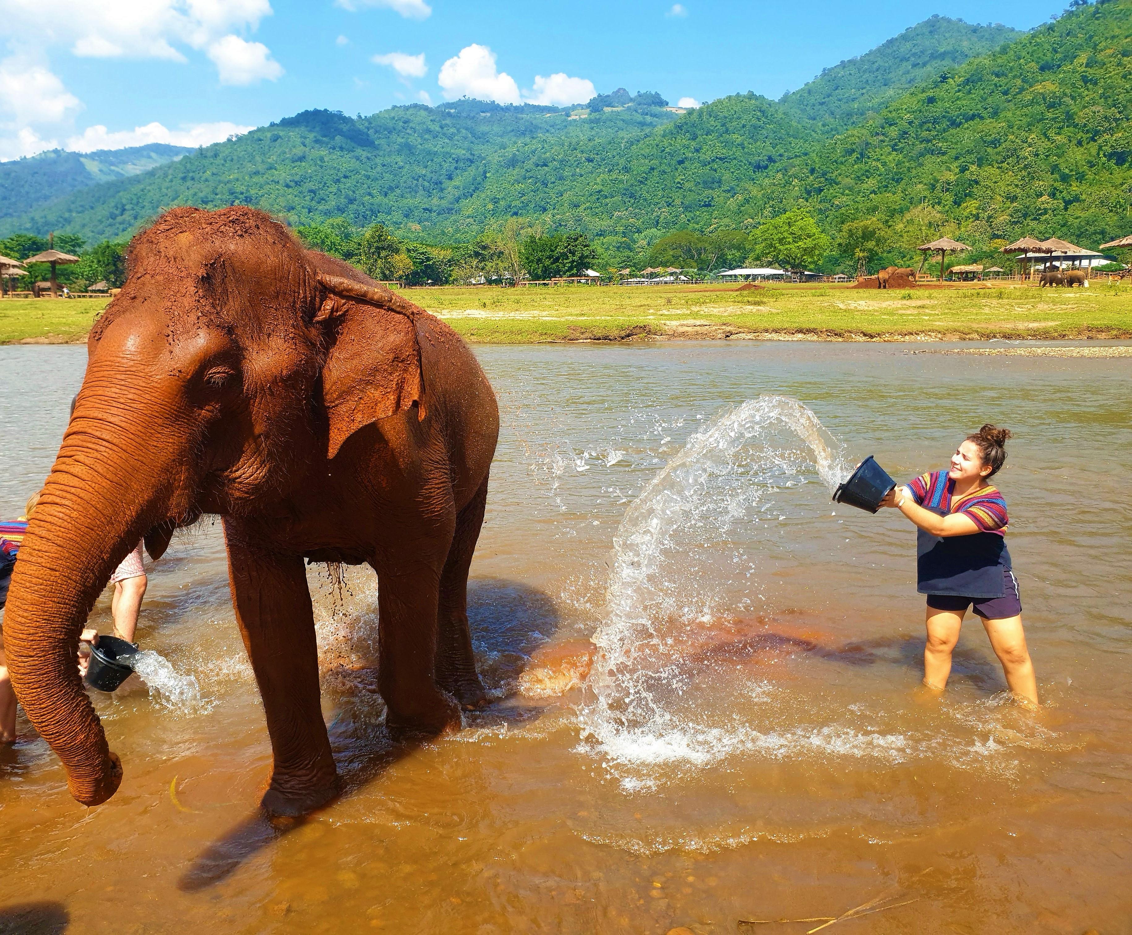 save thaï elephant