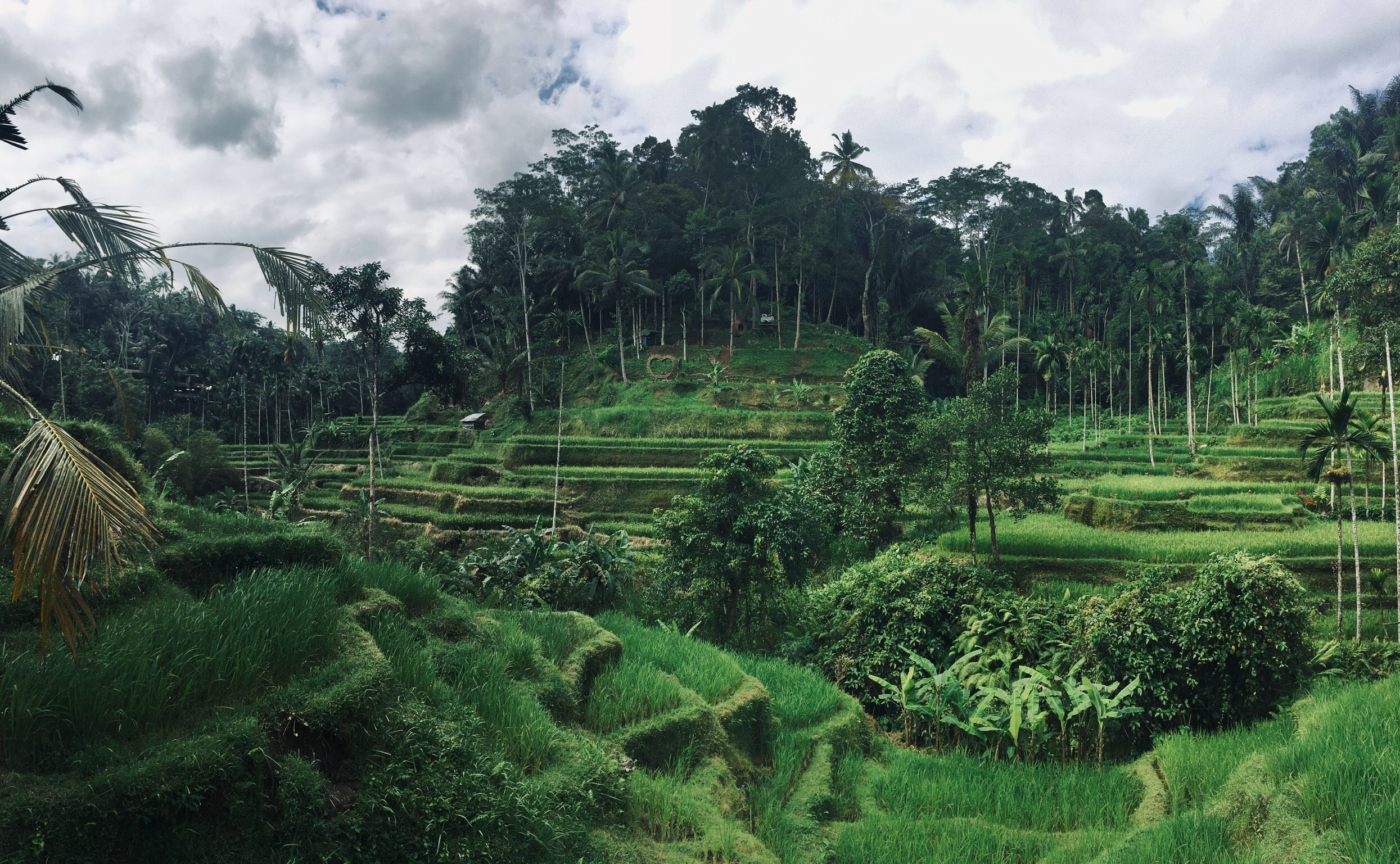 tegallagang rice terrace
