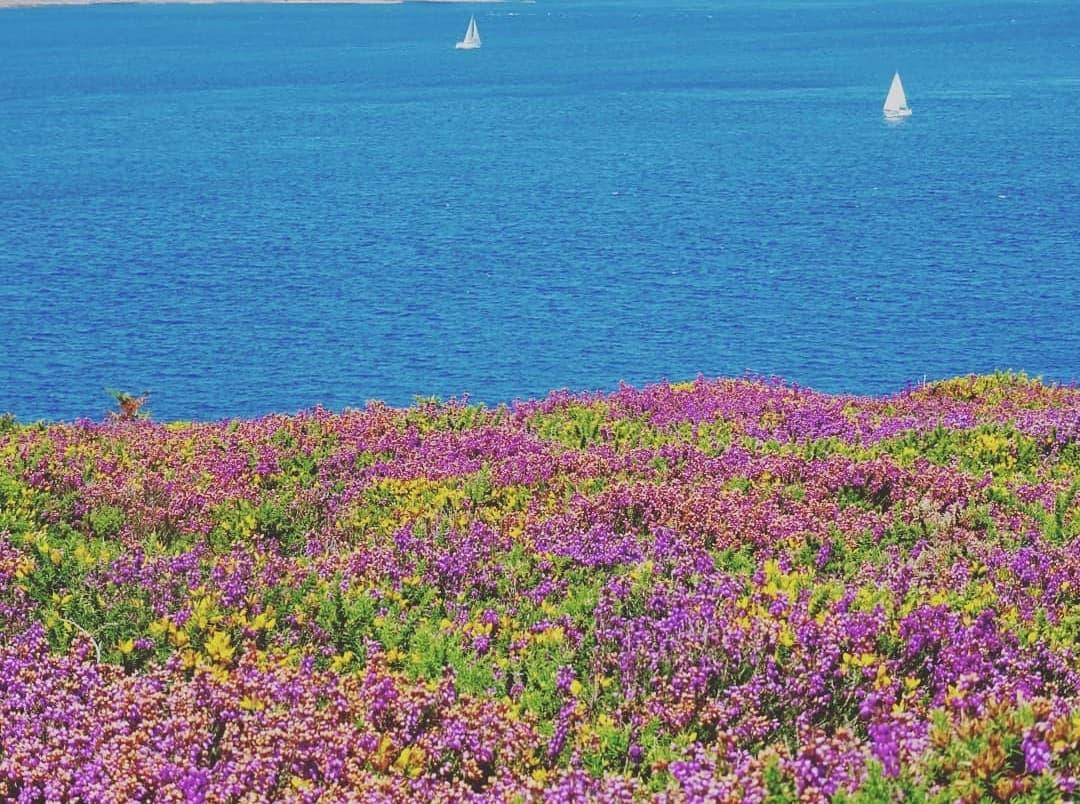 Le soleil qui brille sur les fleurs et la mer en toile de fond à trez-rouz