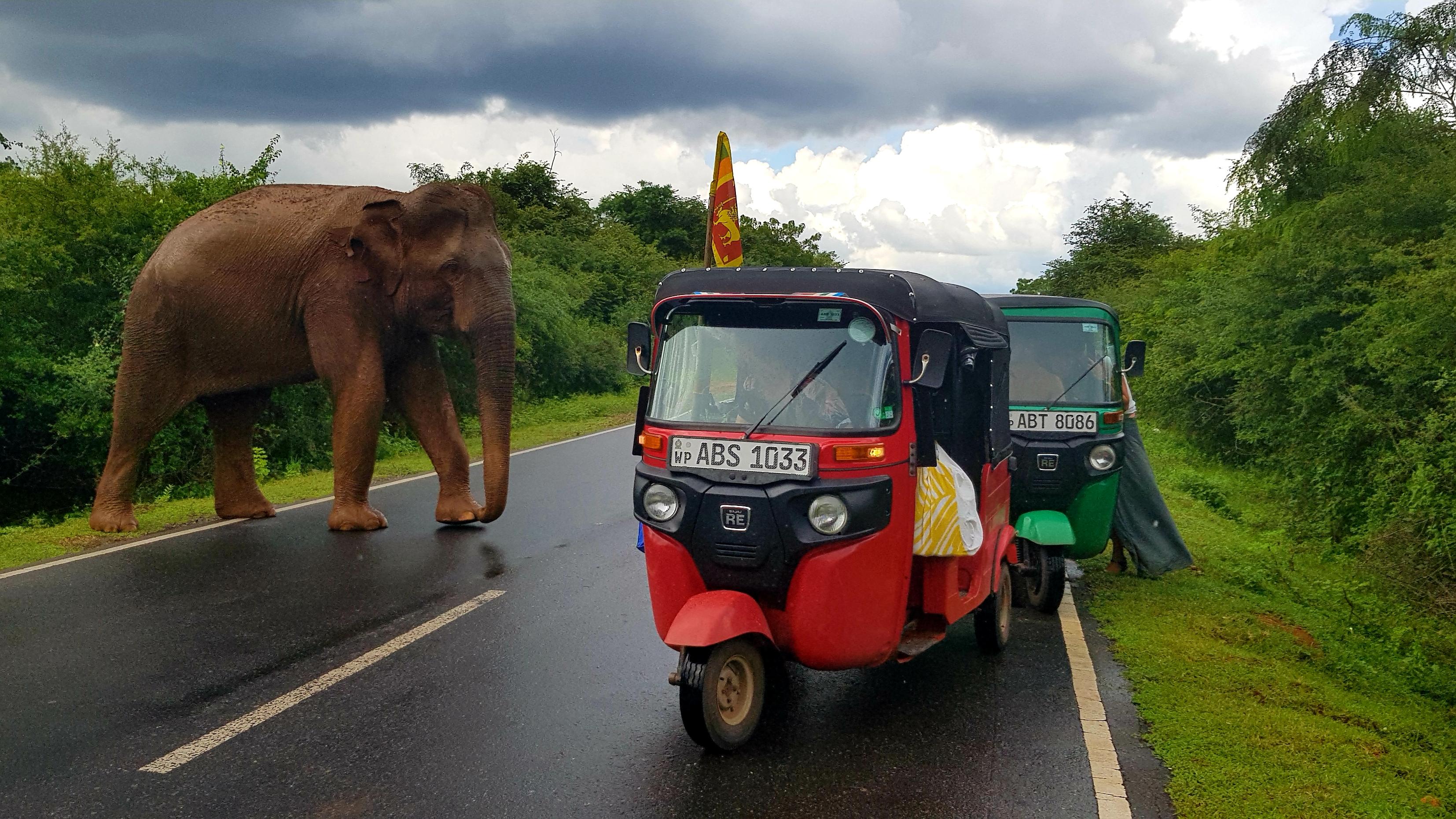 yalla tuktuk-sri-lanka-road-trip éléphants