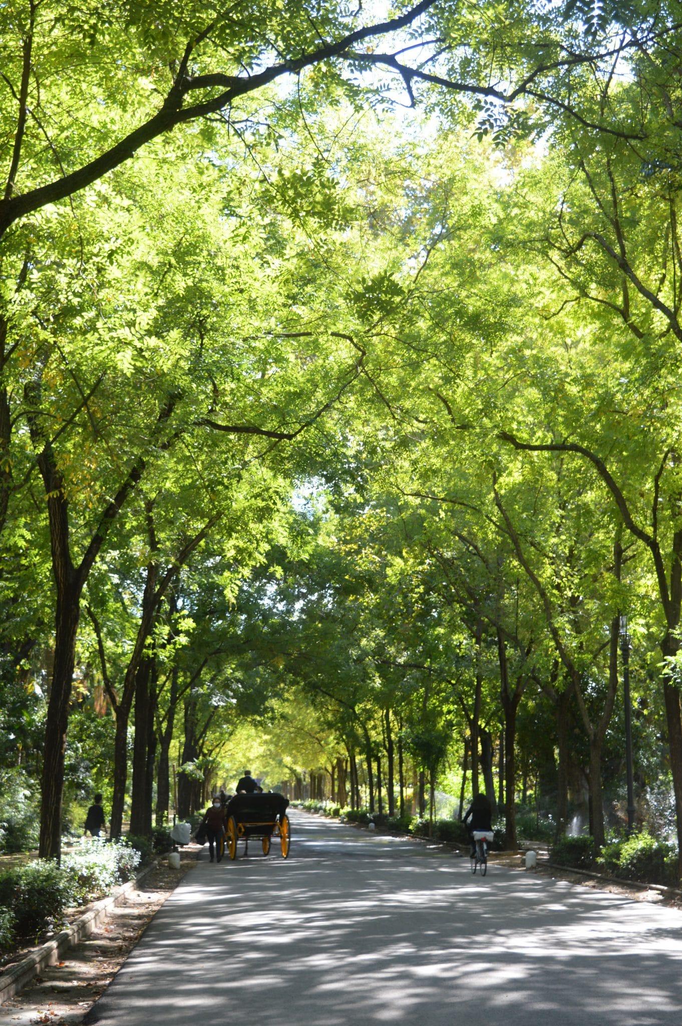 parque maria luisa seville