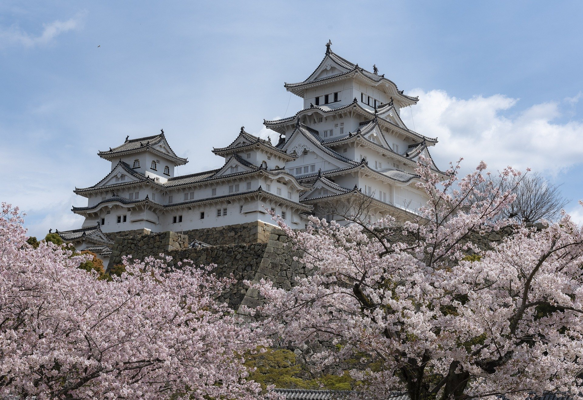 floraison cerisiers temple japon