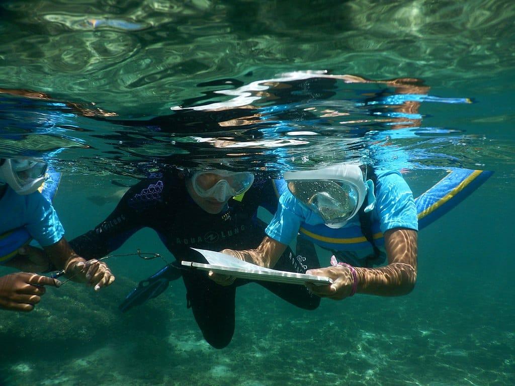plongée sous-marine à ajaccio
