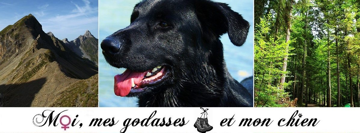 Moimesgodassesetmonchien